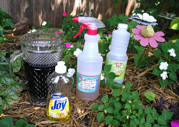 Organic Plant Insecticide